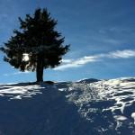 4_einzelner Baum