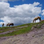 Bozen_Pferde