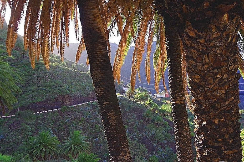 Palmen vor Masca